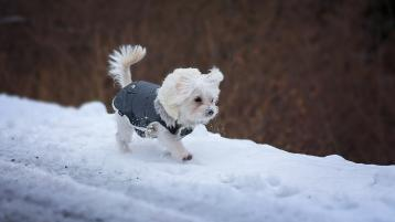 ISPCA pet care tips and advice during frost and snow