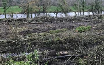 'WAR ZONE': Local residents shocked after 'crime against nature' at Tipperary woods